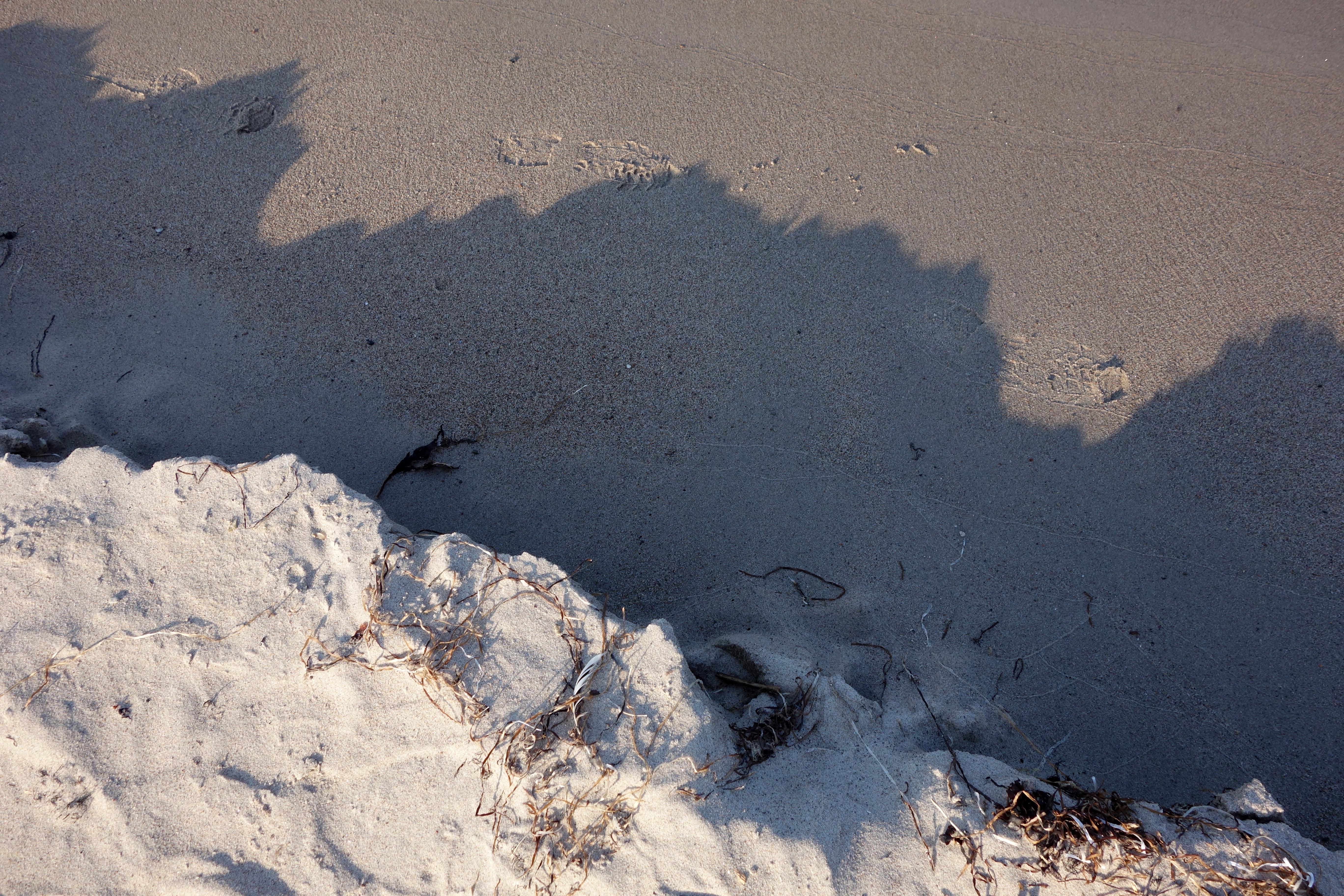 Sandformation från Gotland.